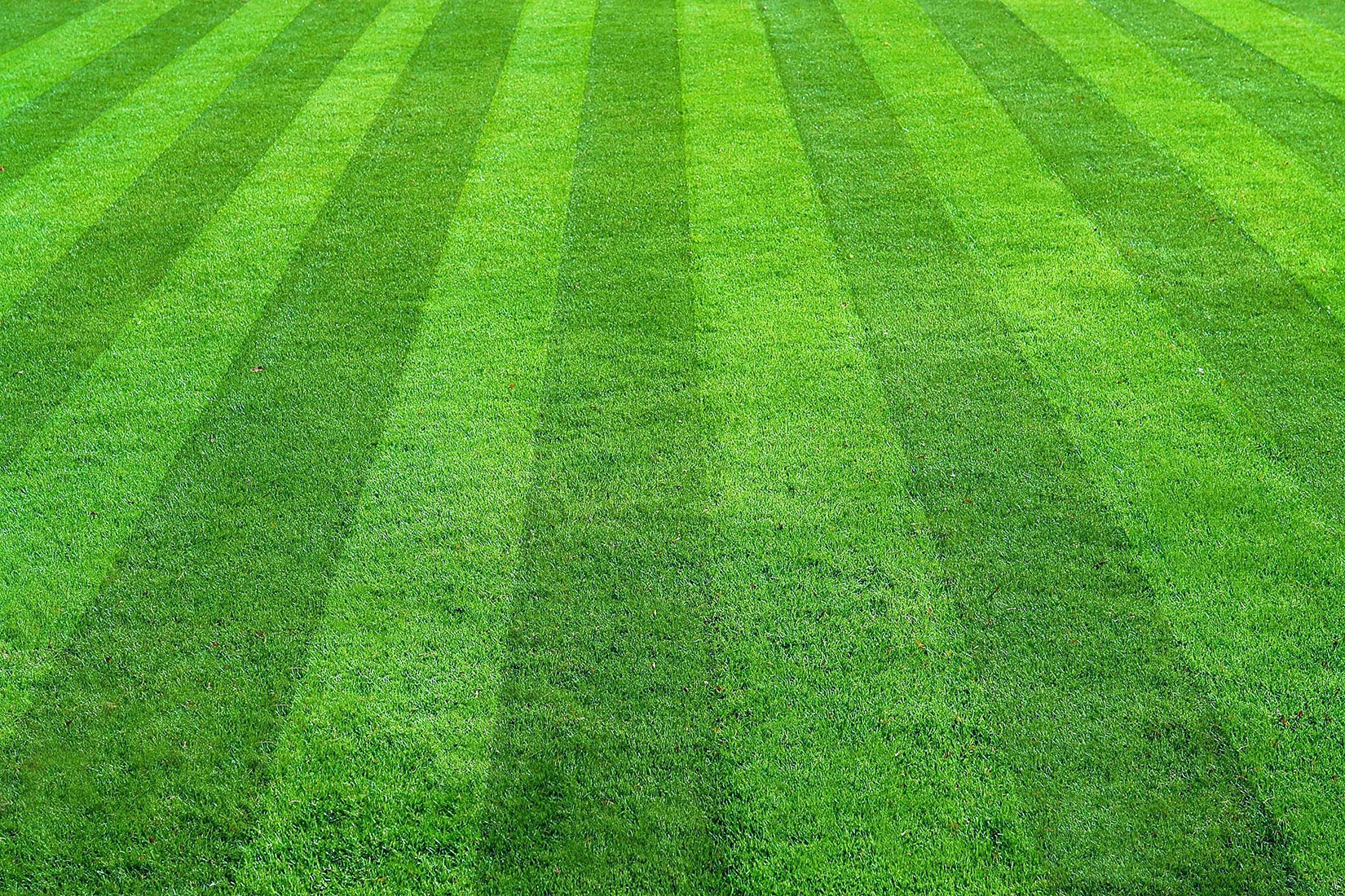 How To Maintain Your Lawn Properly